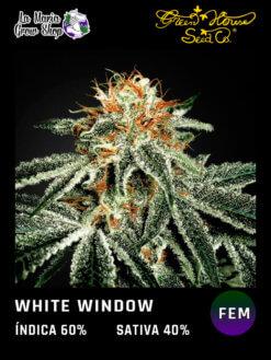white widow floreciendo