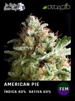 american pie en floracion