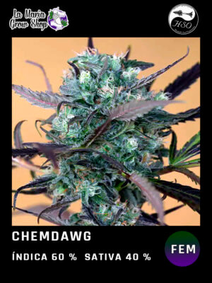 chemdawg en floracion